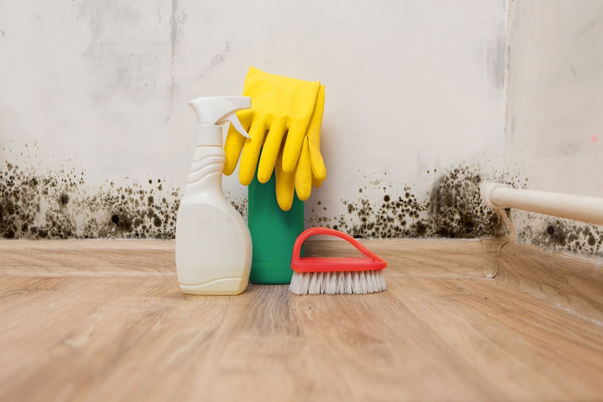 How to Test for Mold-Boca Raton Mold Remediation & Water Damage Restoration Services-We offer home restoration services, water damage restoration, mold removal & remediation, water removal, fire and smoke damage services, fire damage restoration, mold remediation inspection, and more.